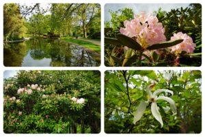 Neljän kuvan kollaasi Alppipuistosta, lampimaisema ja kukkia.