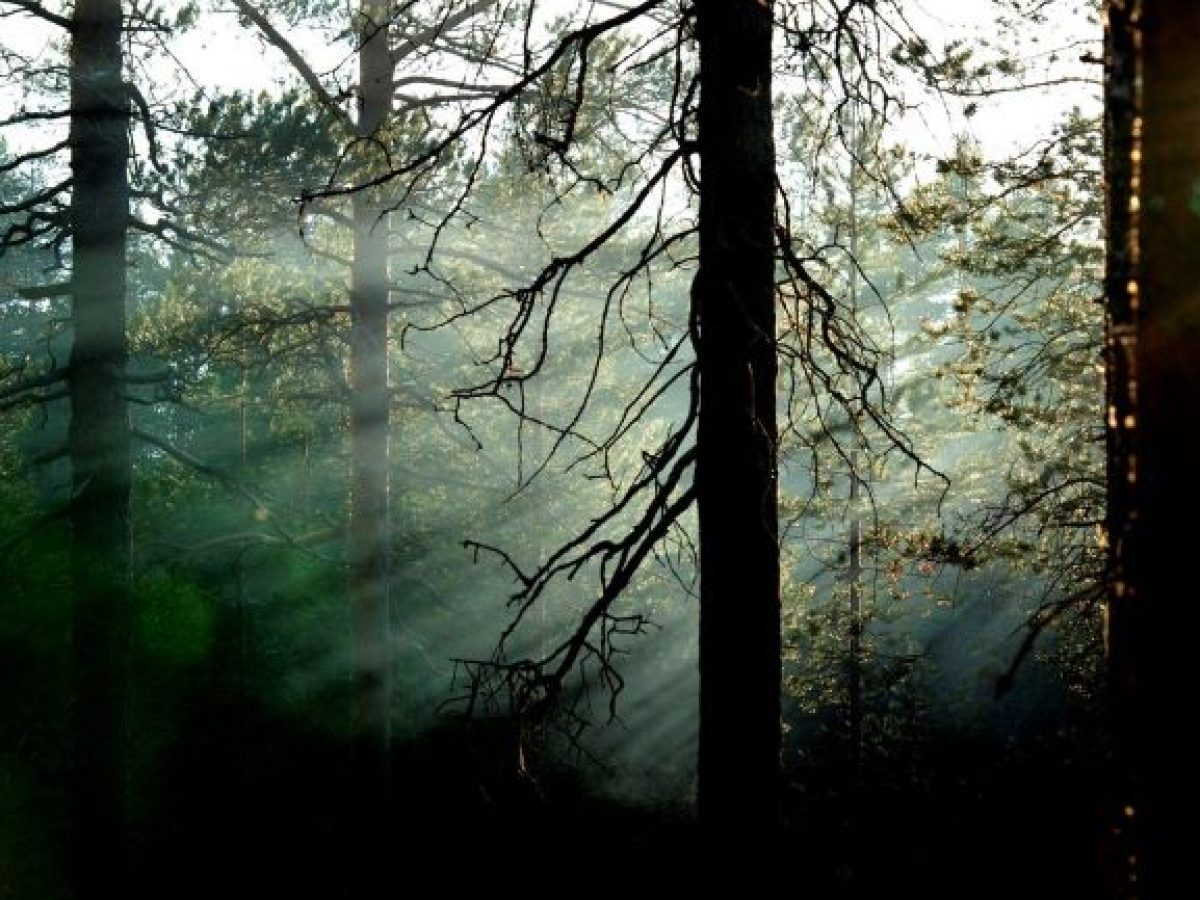 Anna-Reeta metsä